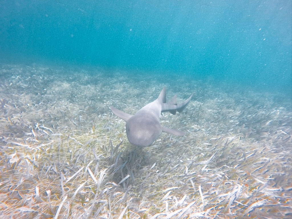 There are many coastal adventures to be had in Belize, including swimming with sharks