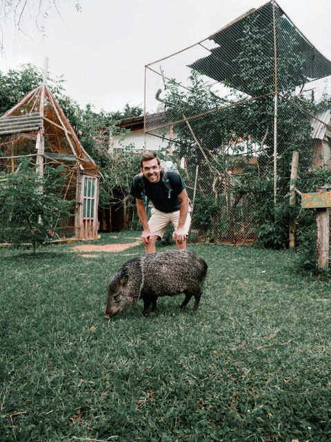 The curious boar followed us around and made friends with Matt