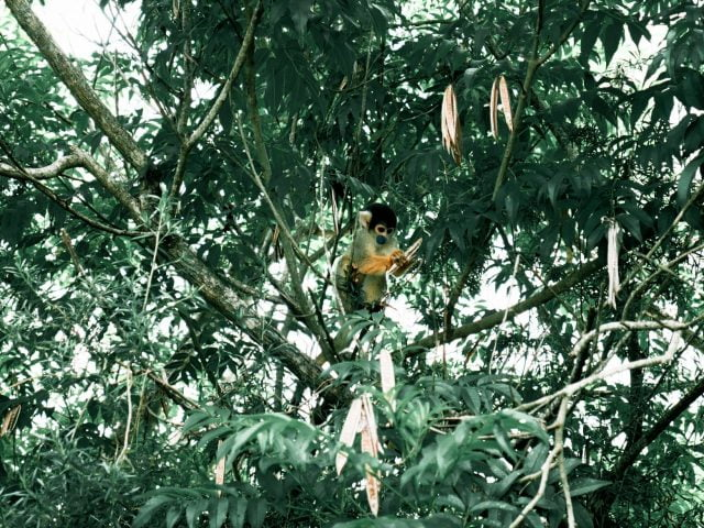 A tiny squirrel monkey was indifferent to us taking a million photos as he munched on some seeds