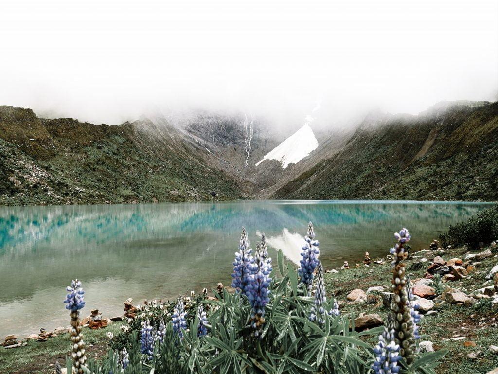 Humantay Lake Flowers