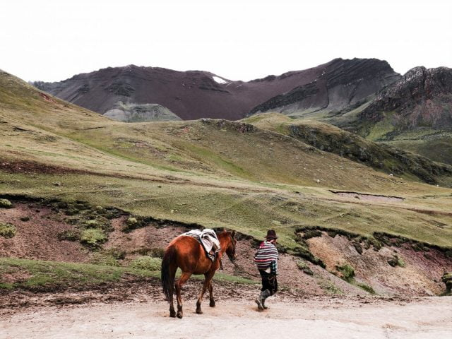 A porter walks back down the mountain with his horse. You can rent one at the base for a round trip or just one way.