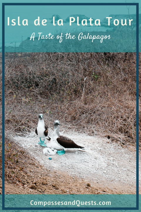 Isla de la Plata Tour: A Taste of the Galapagos