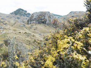 Exploring Ecuador's Cajas National Park