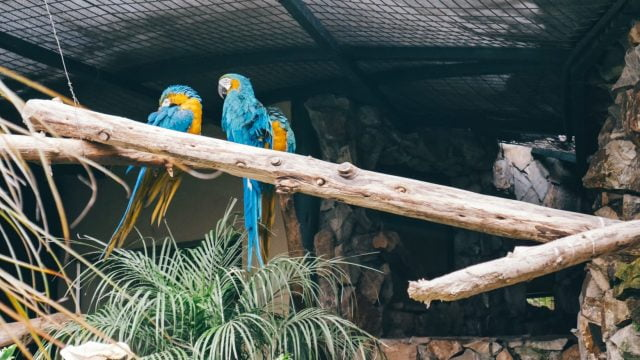 The macaws did not seem too interested in us