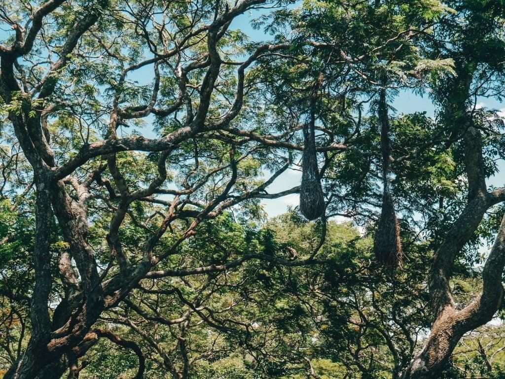 Santa Cruz Botanical Gardens
