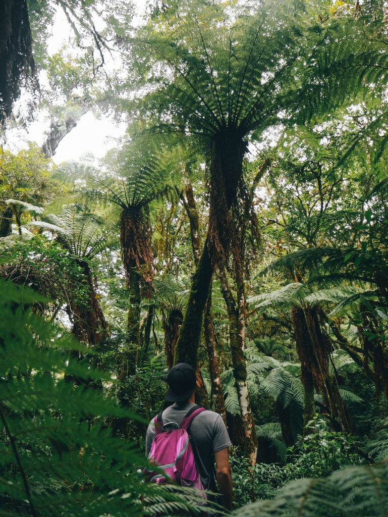 Feeling small among the giant ferns