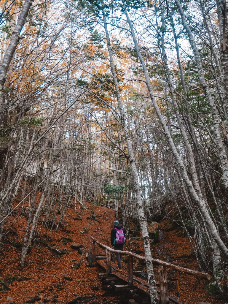 A pretty walk through the woods