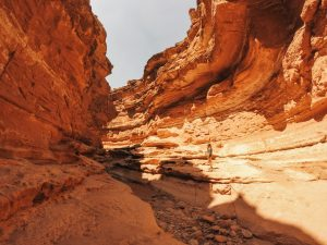 Read more about the article Hiking Cathedral Wash to the Colorado River