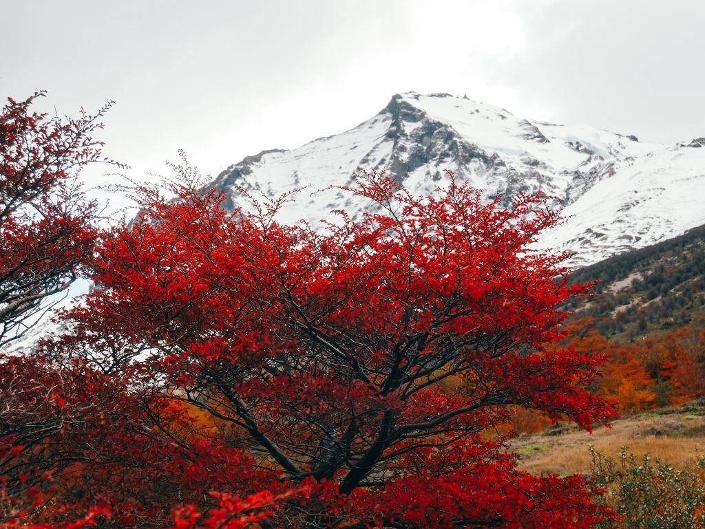 Stunning fall colors along the trail to Mirador las Torres