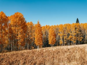 Read more about the article Fall Colors in Flagstaff: The Change of Seasons in Arizona
