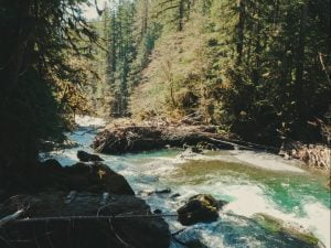 Read more about the article Hiking the Staircase Rapids Loop – Olympic National Park